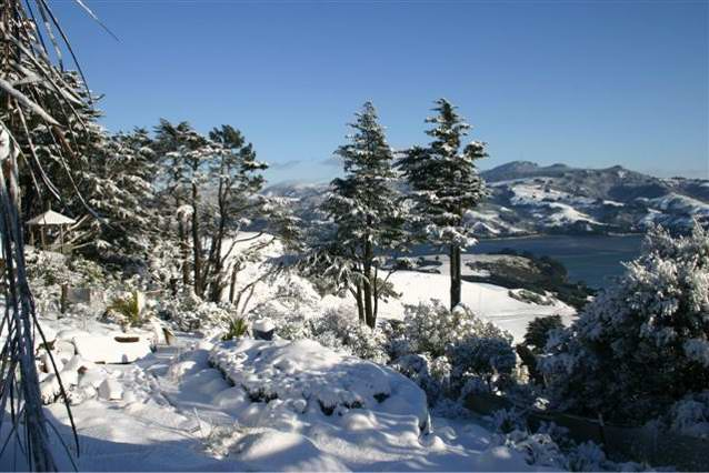 Photograph of Larnach Castle grounds in winter.