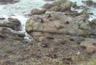 Ohau Fur Seal Colony