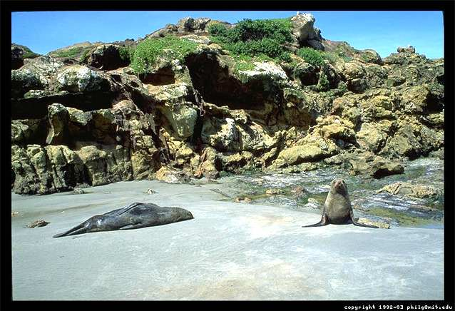 A photograph of two New Zealand seals on a sandy beach