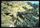 New Zealand Seals